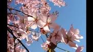 Медитативна музика на фона на красиви цветя