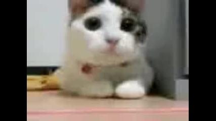техно котка
