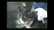 Невероятно но факт - Куче, Котка и Мишка се обичат истински