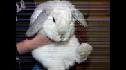 Зайченцето бяло /детска песен/