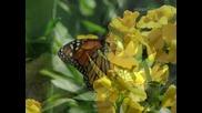 Ернесто Кортазар - Да се превърнеш в пеперуда