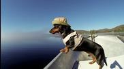 Куче запалено по Риболова