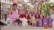 Колко ли много кученца могат да излезнат от една дамска чанта - скрита камера