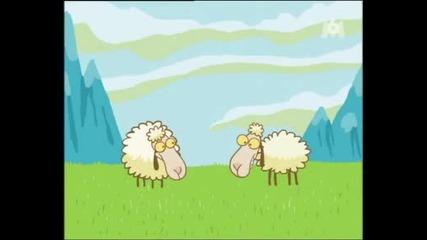 Виждали ли сте вече овце,  които организират пикник?