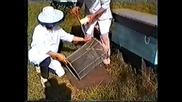 Обработка на пчелите срещу вароатоза