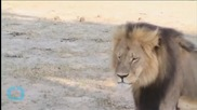 Conservation Responds to Dentist Who Killed Cecil the Lion