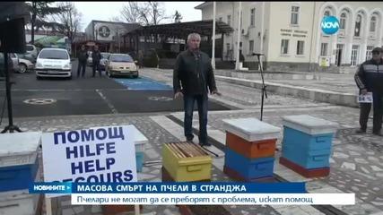 Масова смърт на пчели в Странджа