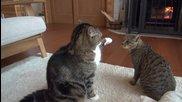 Котето Мару и Хана се закачат . .