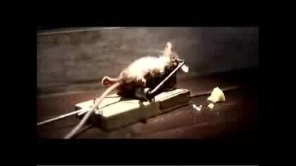 Мишката срещу капана