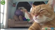Котка краде шоуто
