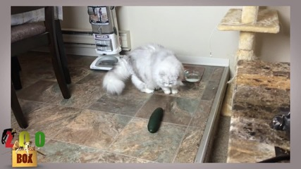 Най-популярната война в социалните мрежи - котки vs. краставици!