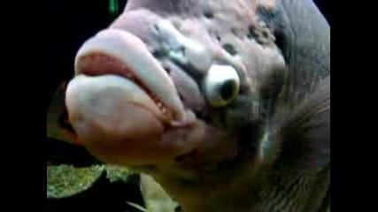 Много...много Грозна Риба. :)