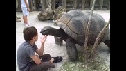 When tortoises Attack!!!! -