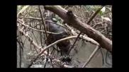 Оцеляване на предела - Панама (цял епизод) - Бг субтитри