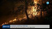 Близо 400 декара иглолистна гора опустоши пожар край Благоевград