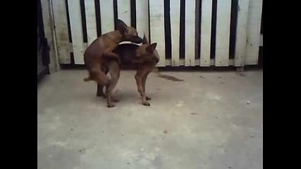 Кучета Правят Sex :d
