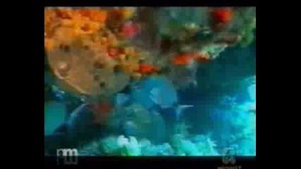 Pasca Submarina G. Dapiran U. Pellizzari