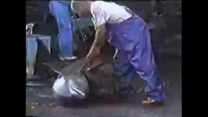 !!! Dolphin killers. Лов на делфини в японско море 16+