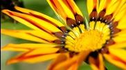 Слънчогледи - Слънчеви Парченца