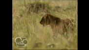 Африканските котки - Disney Nature Е02 Бг Аудио