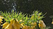 Пролет в Университетската ботаническа градина-Балчик, 21 април 2018 г.