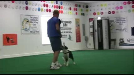 Кучета правят невероятни трикове