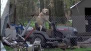 Репортерка преустановява прякото си предаване заради куче шофьор!