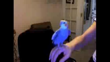 Папагал Прави Beatbox