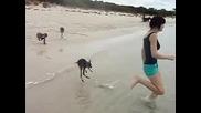 Бебета Кенгуро играят на плажа-сладури :)