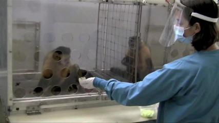 Две маймуни получават различно заплащане - Frans de Waal's Ted Talk