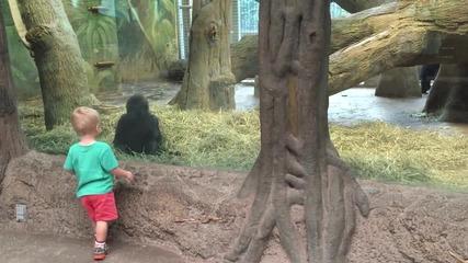 Дете и горила се забавляват в зоопарк
