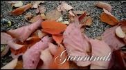 Атлас Есенни Цветя