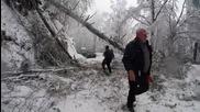 """Падат дървета по пътя Батак - Доспат - """"Моята новина"""""""