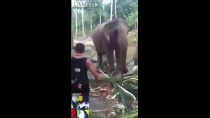 Слон нокаутира мъж