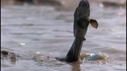 Рибата скачач