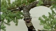 Annoying Orange Wazzup 3: Bonsai Tree