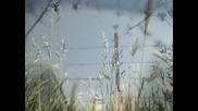 Walter Dionisie - Fields of gold