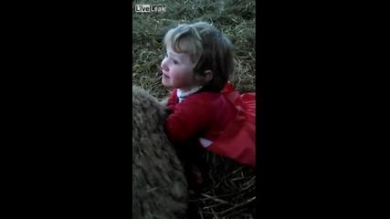 Три Годишно Момиченце Акушира На Овца