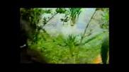 Kalamarka - Amazonas