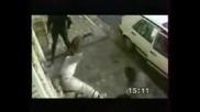 Брутални Полицейски Кучета!