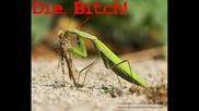 Rza Feat Masta Killa - Mantis