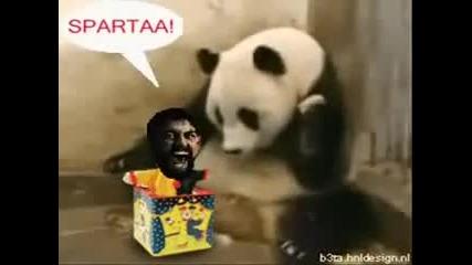 This Is Panda__