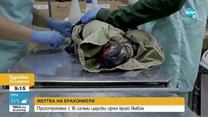 Какво е състоянието на простреляния царски орел