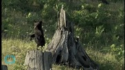 Bears Caught Fighting Over New Jersey Trash