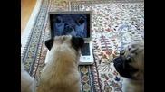 Сладки кученца се гледат в youtube