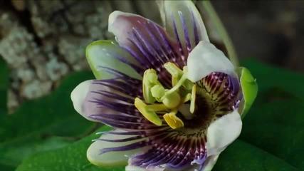 Красотата на Природата - Опрашване