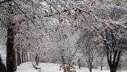 """От """"Моята новина"""": Първо снежно утро от Разград"""