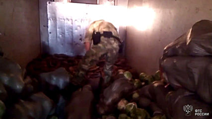 Russia: Customs stops attempt to smuggle 4000 threatened tortoises from Kazakhstan