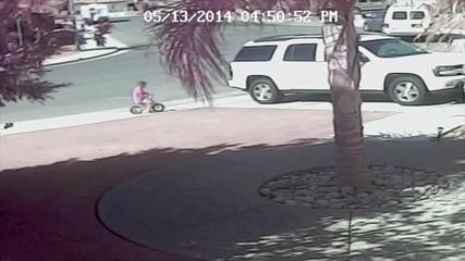 Домашна котка спасява малко дете от разкъсване от куче !