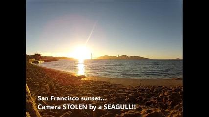 Чайка краде камера - уникалeн залез на Сан Франциско